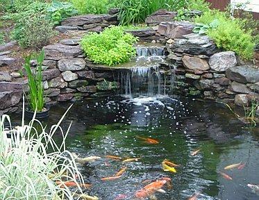 The Best Koi Pond Ideas for Your Backyard on Koi Ponds Ideas  id=56777