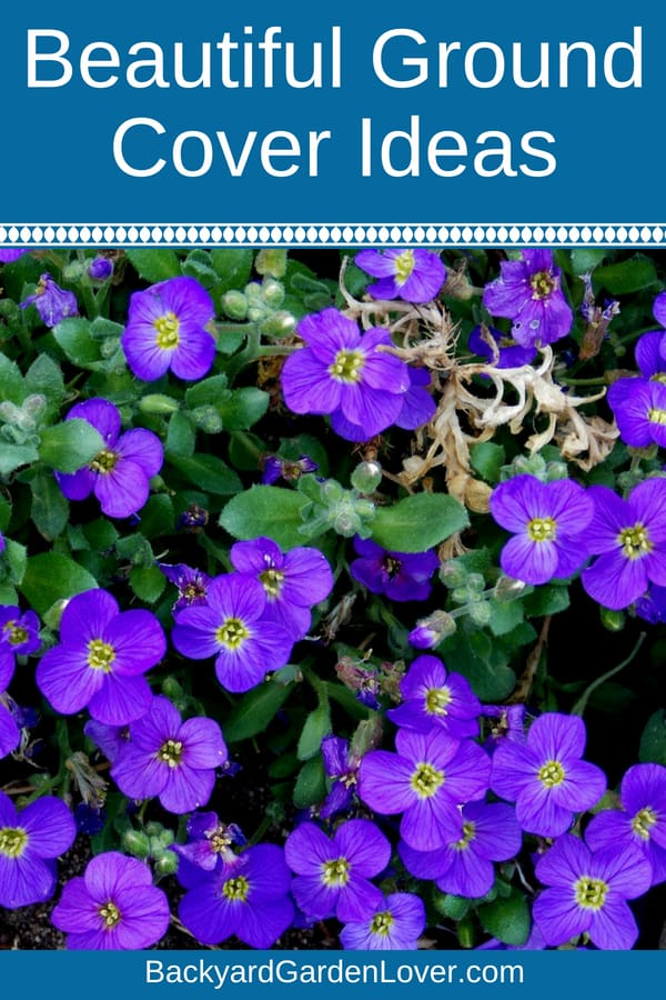 Low Maintenance Ground Cover Ideas For Landscaping