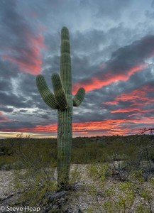 Sunset in Saguaro National Park Tucson