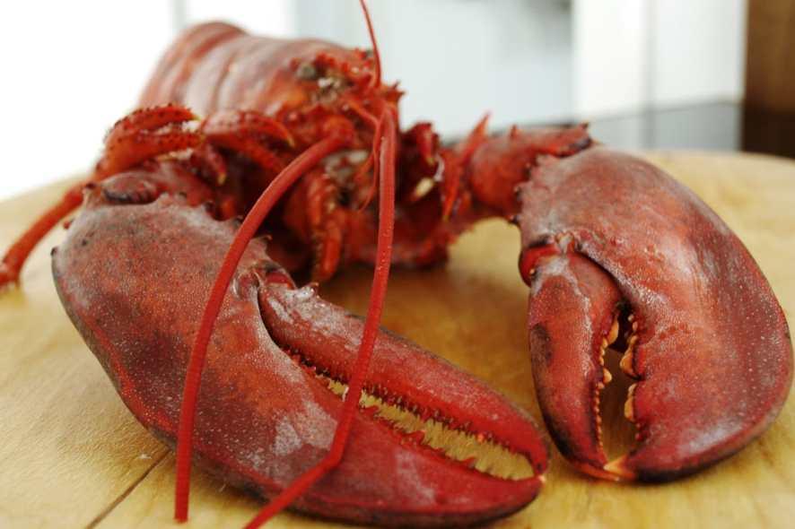 Kanadischer Hummer vom Grill - High Pressure Lobster