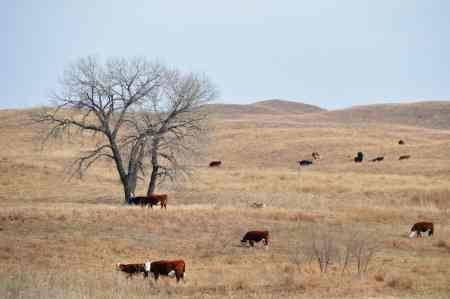 Morgan Ranch Beef, Nebraska USA