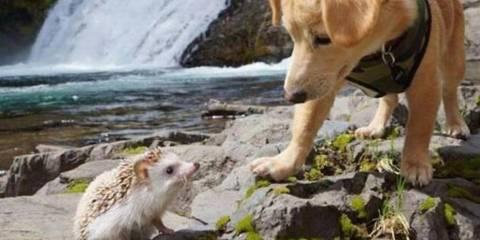monday morning puppy dog at a river
