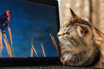 Cat Lives in 2016 badchix