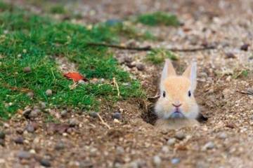 baby bunny daily randomness