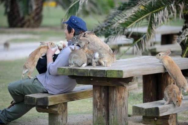 bunnies man in a park