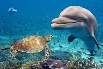 Daily Fresh Baked Randomness (40 Photos) morning awesomeness in the sea with dolphins and turtles