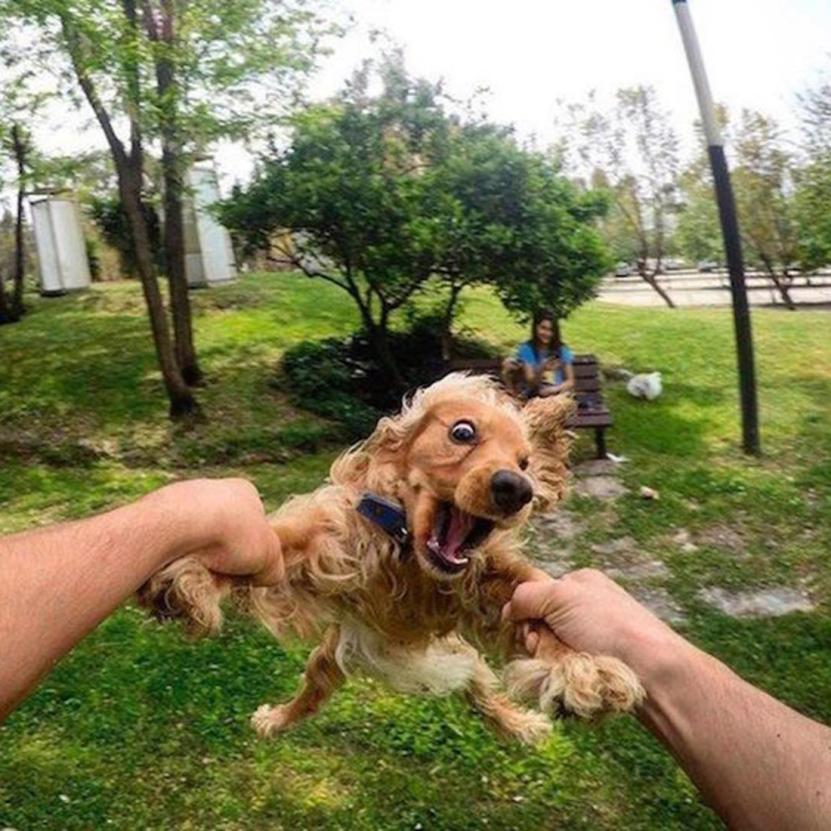 dog swing randomness funny pictures
