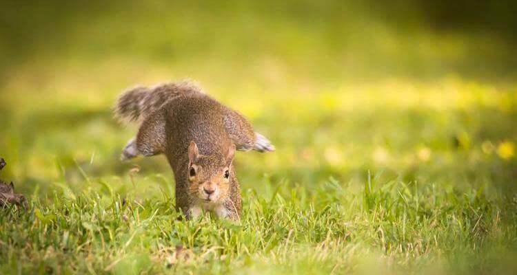 squirrel Daily Fresh Baked Randomness (30 Photos) 1