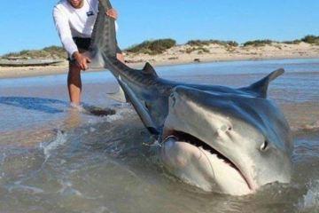 shark attack beach