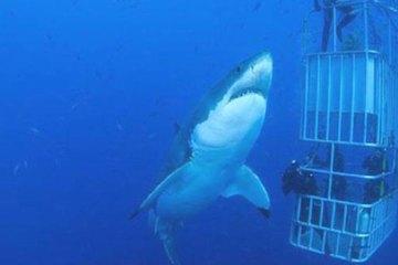 shark wonderful