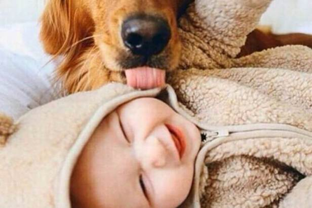 dog kisses a baby