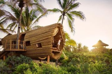 amazing tree house designs