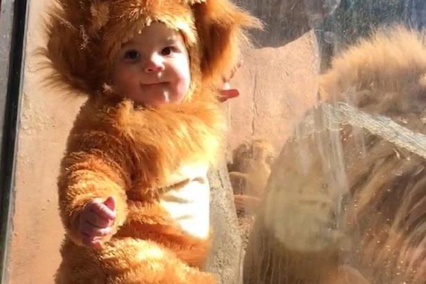 Adorable baby dressed as Lion