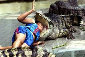head in crocodile