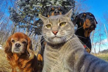 cat selfie with dogs