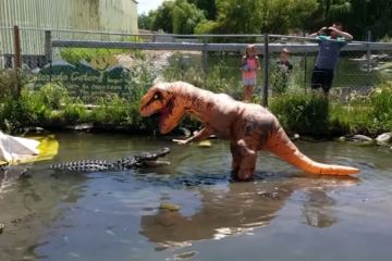 T-Rex Teased a massive Alligator