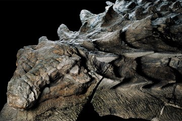 Newly Unveiled Dinosaur Fossil is Best Preserved Of Its Kind 1