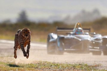 Formula E Car vs Cheetah 1
