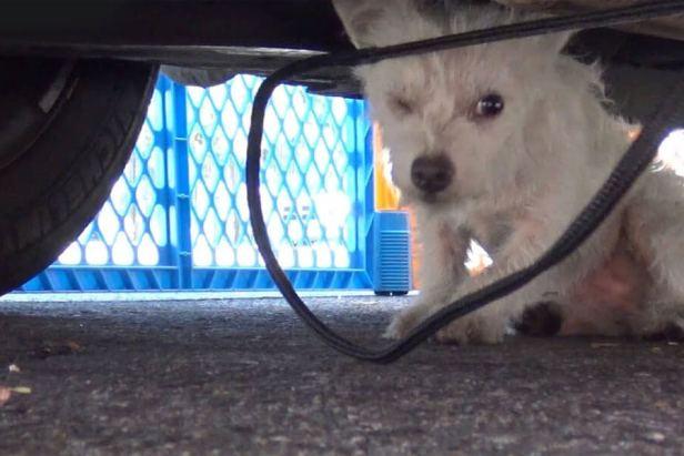 Little Homeless Dog Rescued 1