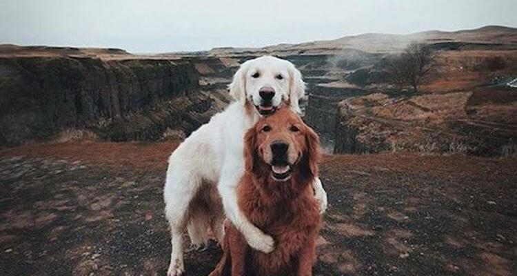 cute dogs Daily Fresh Baked Randomness (40 Photos) 2