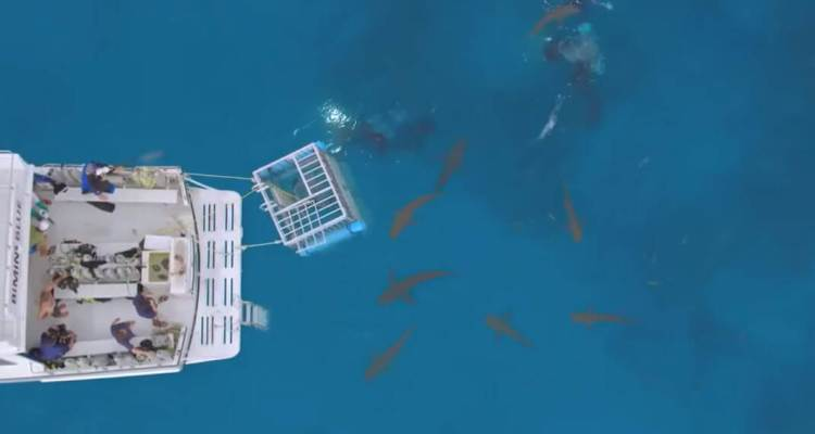 Shaq Goes Cage Diving For Shark Week, Reef Shark Slipped Through The Bars 1