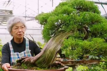 World's First and Only Female Bonsai Sensei 1