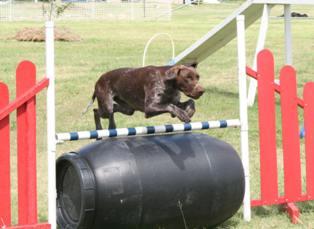 aif4 murphy jump barrel_3235
