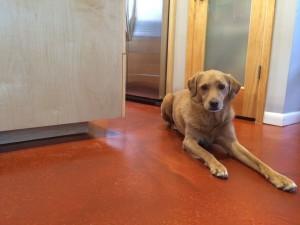 Houston-dog-Stella-Kitchen-300x225