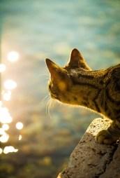 Sea Cat Fishing