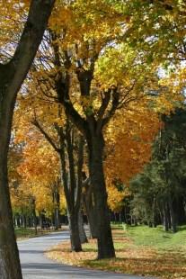 Autumnal avenue - A Baxter