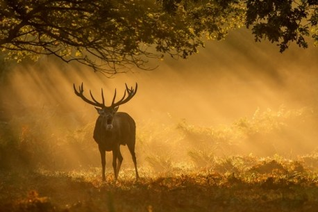 October in Richmond Park By Richie