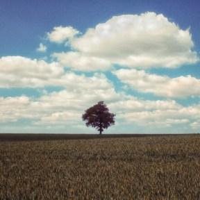 Lone Tree - Craig Gorham