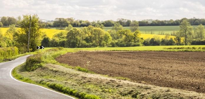 Country Lane; Pat Seeley