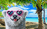 EP328: Tropical Getaway - Tropical Getaway Badge