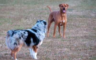 More Than a Yard: Finding the Right Home for Your Pooch