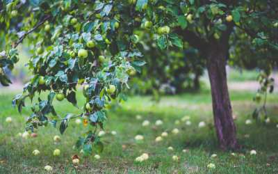 7 Places to Go Apple Picking in Washington