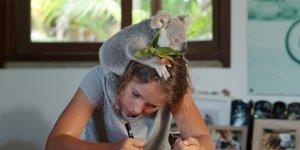 Izzy's Koala