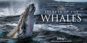 Secrets of the Whales la docuserie di James Cameron è in arrivo su Disney+