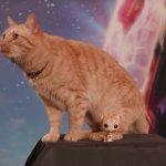 Captain Marvel: mici di ogni tipo in un nuovo virale ispirato al gatto Goose
