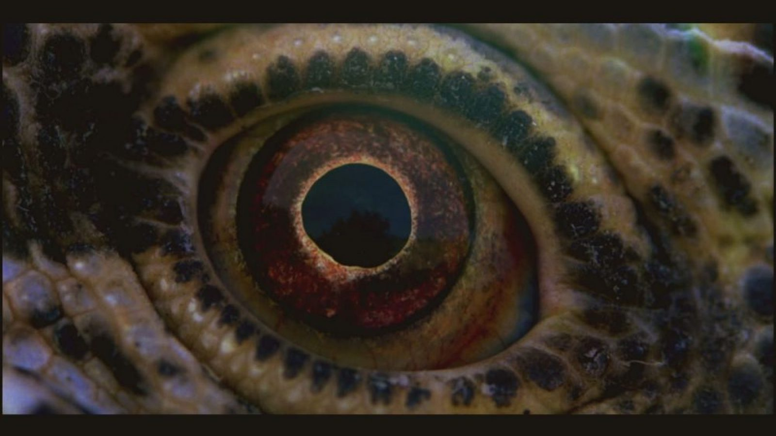 VOYAGE OF TIME - Still 2