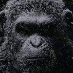 War for the Planet of the Apes: dettagli e aspettative sul film di Matt Reeves dal panel del New York Comic-Con
