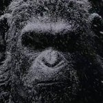 War For The Planet Of The Apes: Cesare protagonista del primo motion poster