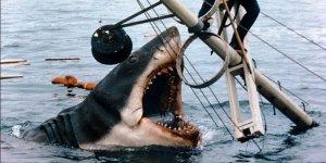 lo squalo modellino