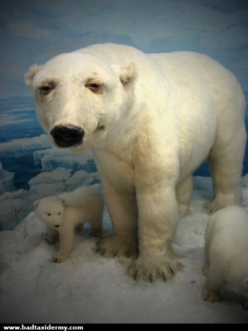 144 Polar Bear Bad taxidermy is the perfect mix of hilarious and terrifying