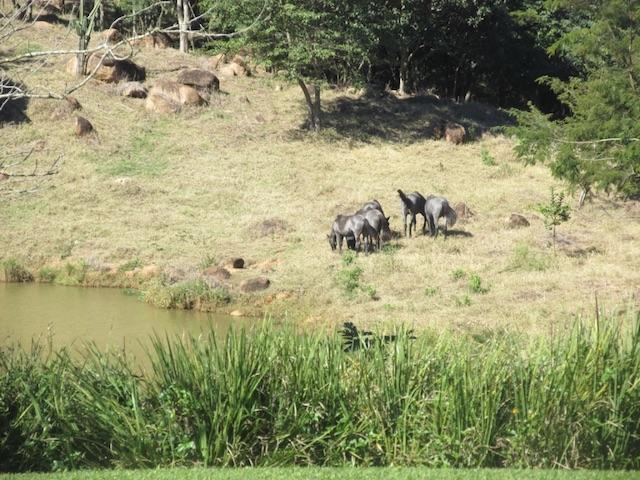 fazenda capoava