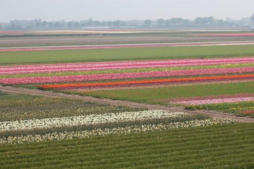 Bulb fields em Keukenhof
