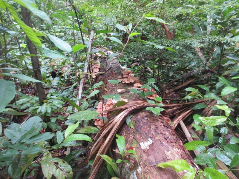 Trilha na floresta - Manaus
