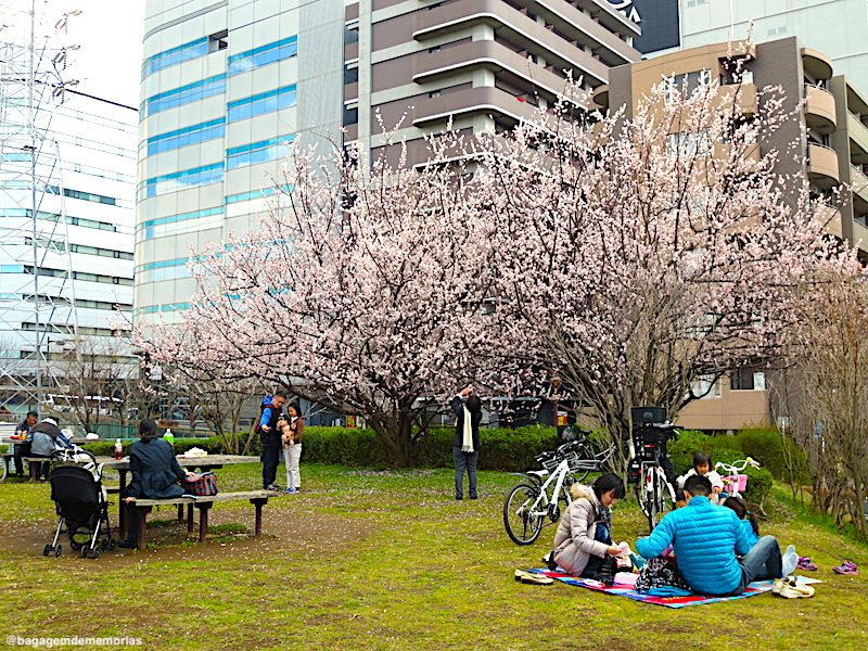 yokohama_picnic sakura