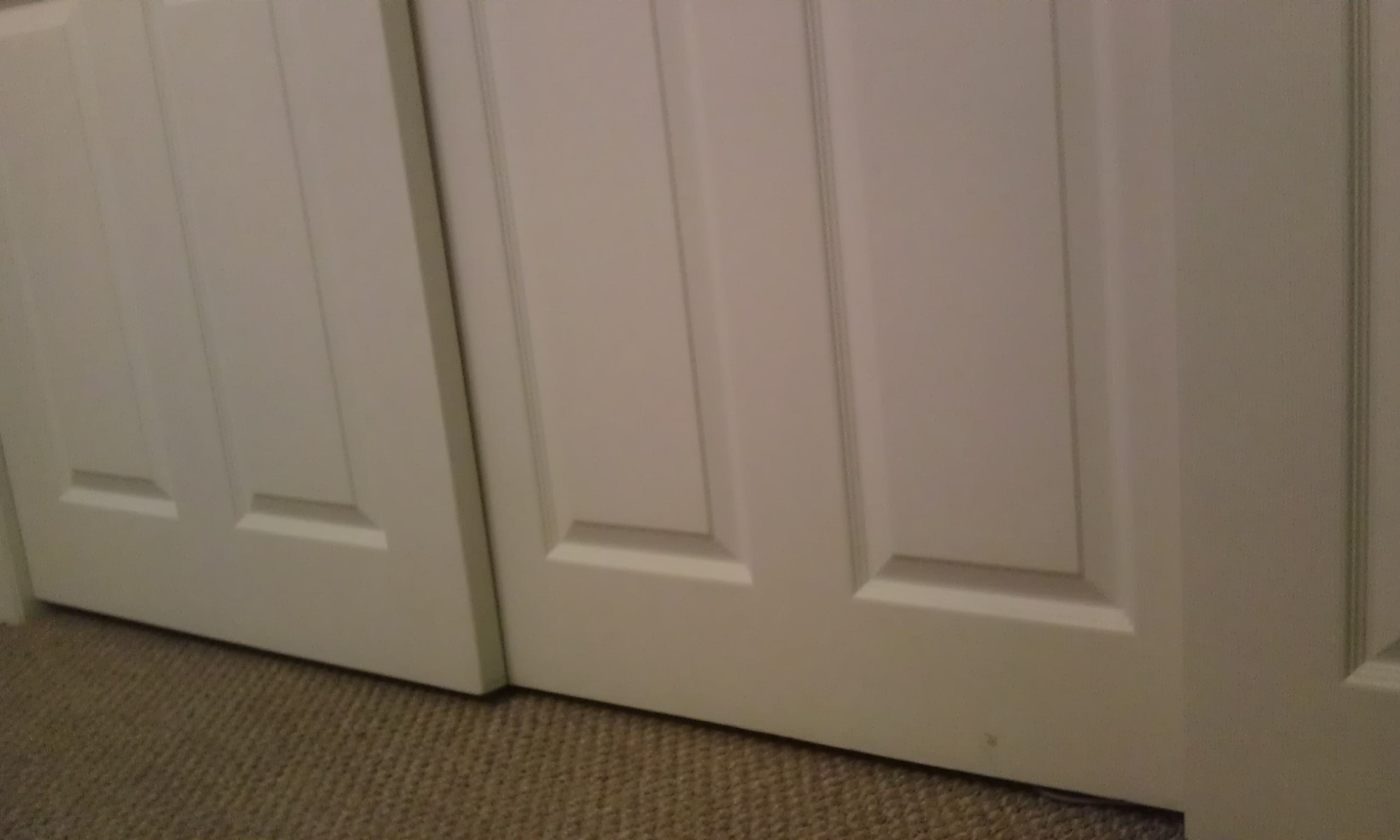 A closet for a diabetic cat to explore