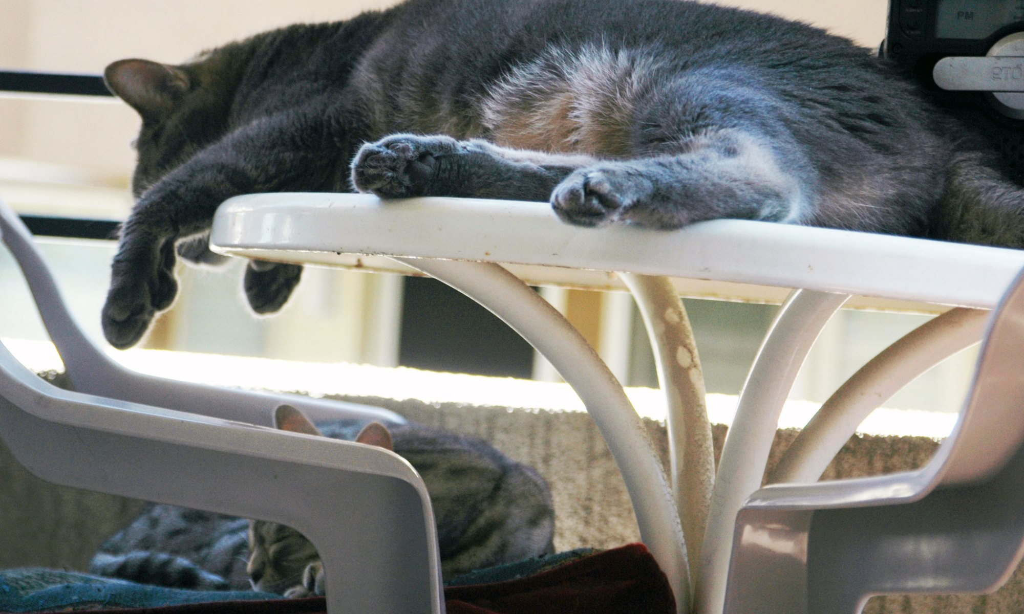 Bagheera the Diabetic Cat and Jacey Relax on the Balcony